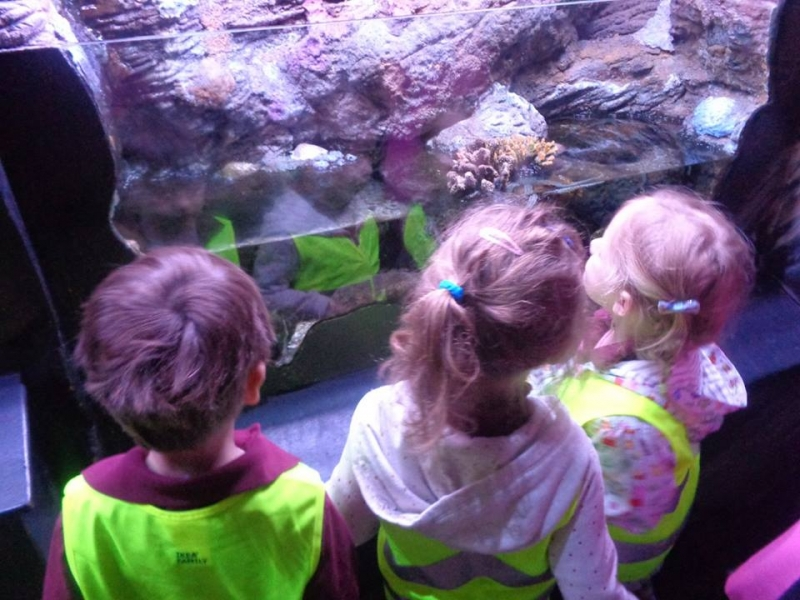Watching the sea creatures