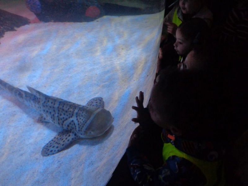 Pre school children watching the sharks