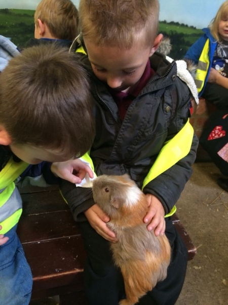 Holding the guinea pigs
