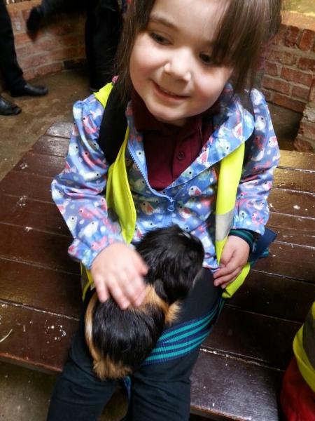 A big guinea pig