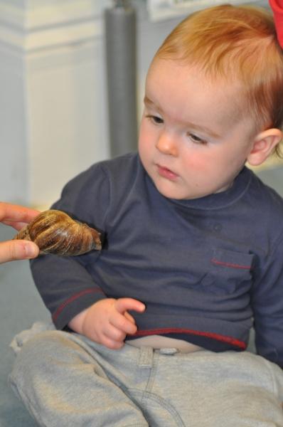 A big africian snail