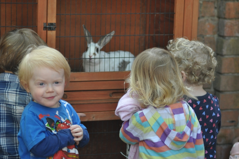 Children meet the rabbits