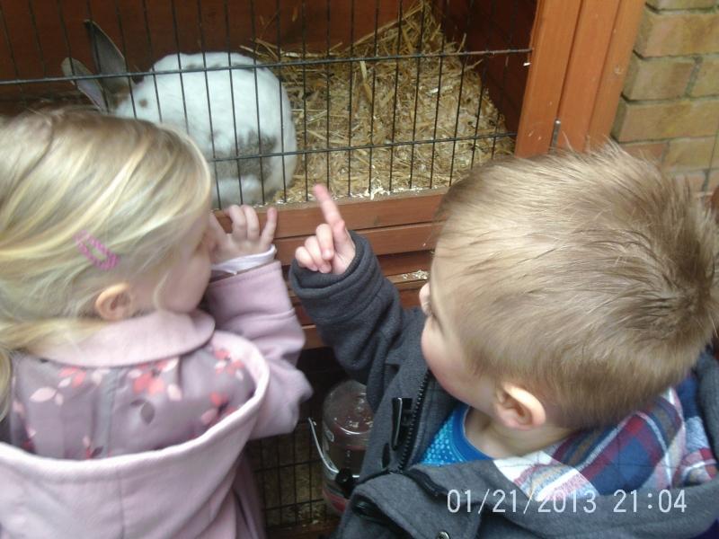 Rabbits eating his food.
