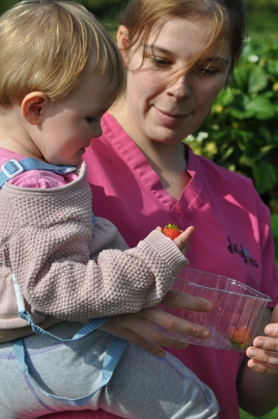 Picking strawberries with practitioner