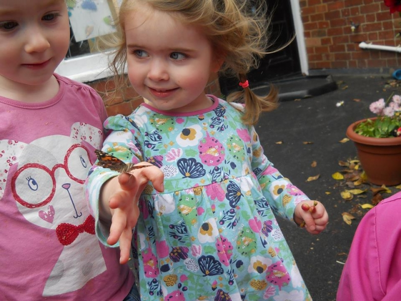 we watched our caterpillars turn into butterflies