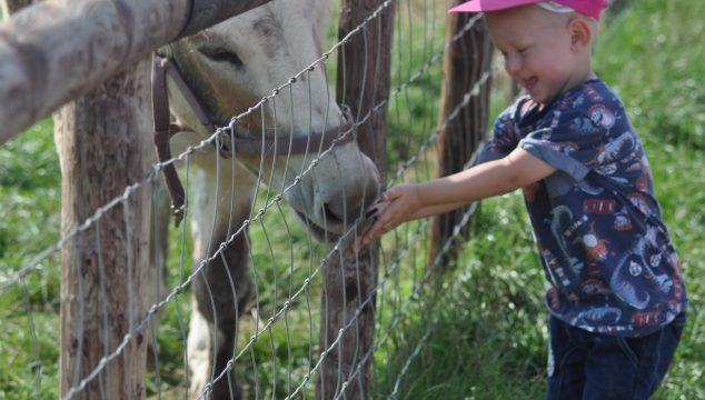 Toddlers Trip To Mini Meadows Farm