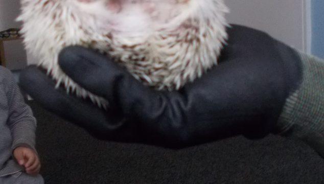 Pre-School Minors' Hedgehog Visit